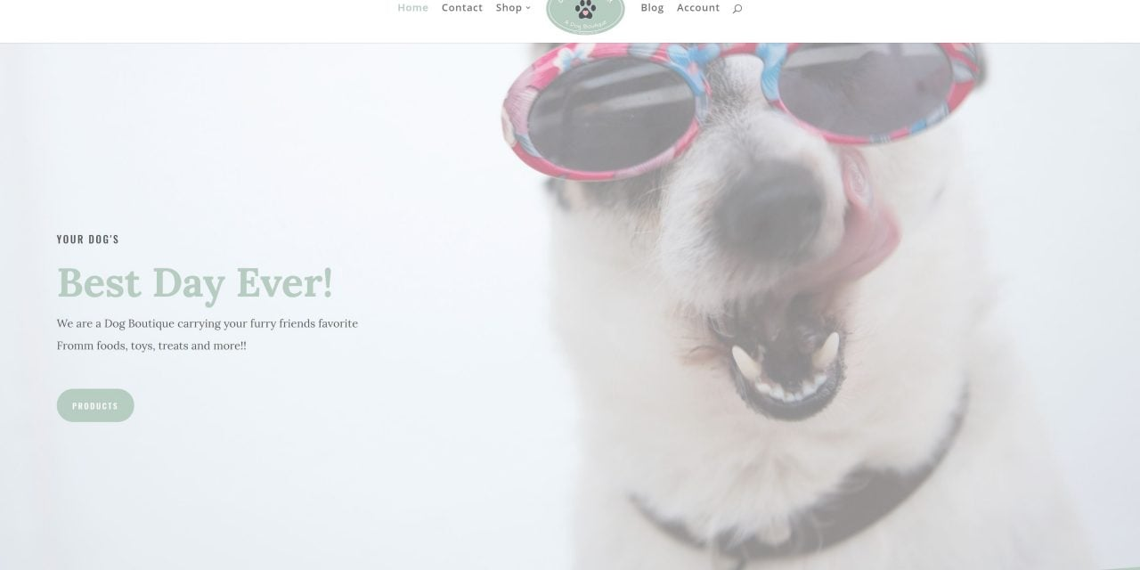 Best Day Ever, A Dog Boutique site launch